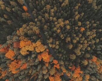 Orange Forest PDF Cross Stitch Pattern