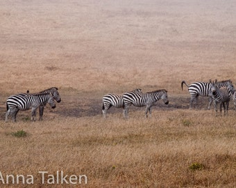 Zebras in Big Sur?