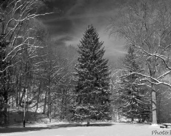 Nature Photography, Fine Art Photography, Black and White Prints, Wall Art, Landscape Photography,  Greeting Cards