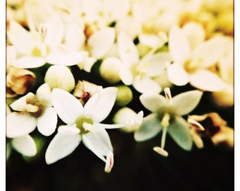 Nature Photography, Wall Decor, Macro, Flowers, Home Decor Photography, Fine Art Print, 'Little Flowers'