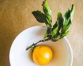 """Food Photography """"Satsuma Mandarin"""""""