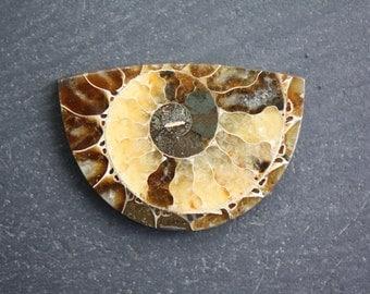 Ammonite Fossil, Large Designer Cabochon
