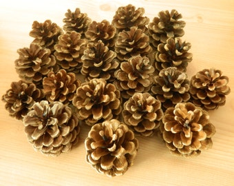 20 Pine cones for crafts