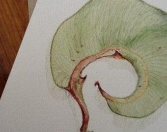 Eucalyptus Leaf - Blank card