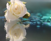 Instant Digital Download Fine Art Flower Photography - White Rose on Teal and Blue Water - Reflection
