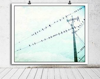Birds photo, birds, Bird photography, blue sky with birds photo, nature photography, blue, white, birds on a wire