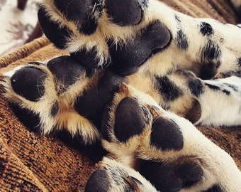 Puppy Paw Butter