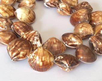 "Whole shell beads kaccol shells 16"" strand"