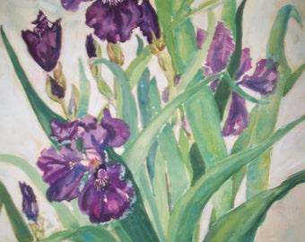 Purple Ruffled Iris