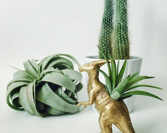 Small Gold Parasaur / Parasaurolophus Dinosaur Planter Air Plant; Dinosaur Planter; Desk Accessory; Home Decor; Gift; Air Plant Holder