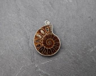 Ammonite Fossil Pendant, Silver