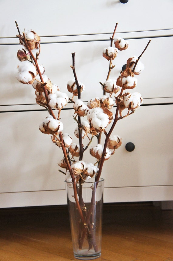 2 x organic dried cotton stems 2 cotton branches cotton ball stalks l arrangement natural. Black Bedroom Furniture Sets. Home Design Ideas