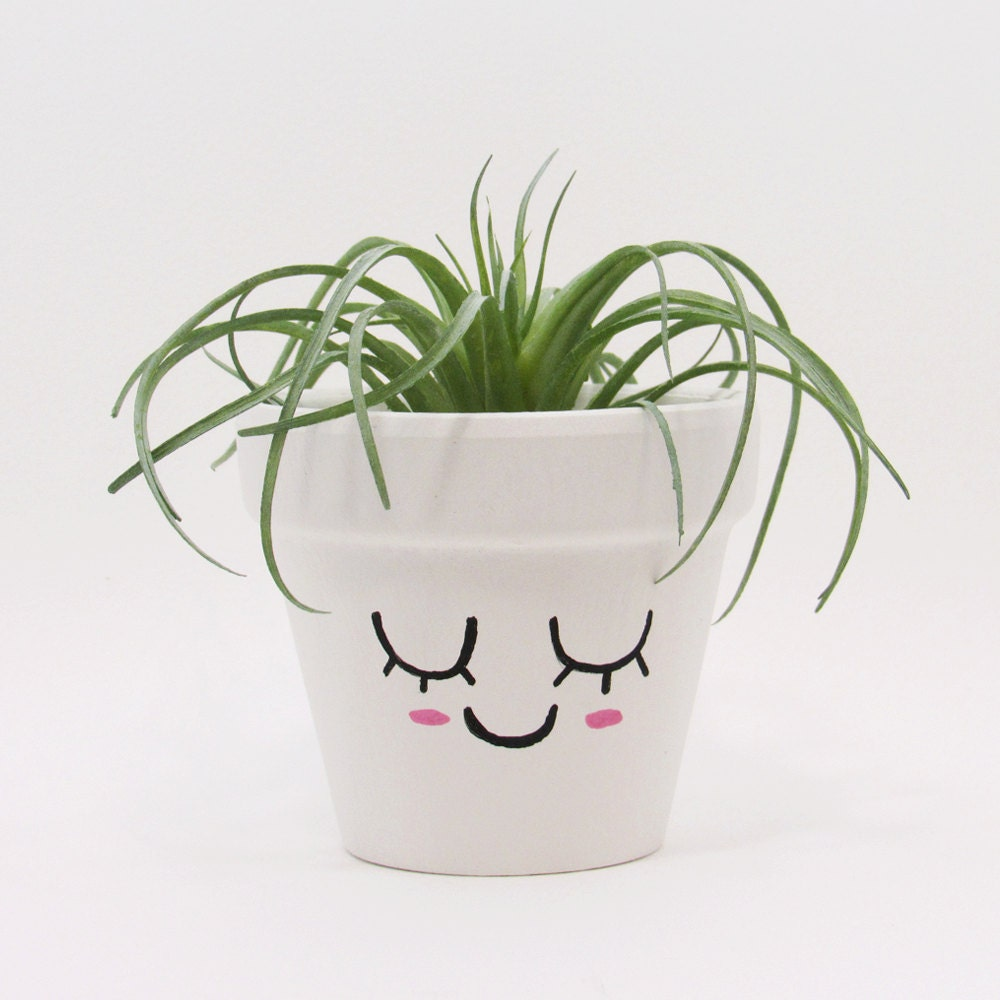 terracotta pot succulent planter cute face planter air