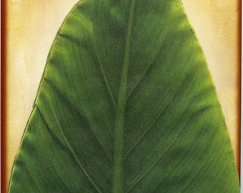BANANA LEAVES, Deco Leaves, Cheese Leaves, Tropical Leaves, Paper Leaves, Food Safe Leaves, Parchment Leaves, Wine Tasting Leaves