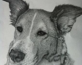 Custom Pet Portrait in Graphite Pencil