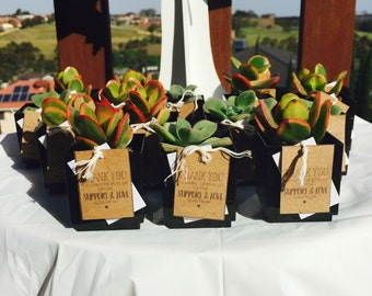 Succulents Wedding Favours / Bonbonniere