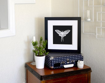 """Luna Moth Inverted Freehand Ink Drawing Limited Edition Print, Signed, Numbered 8"""" x 8"""""""