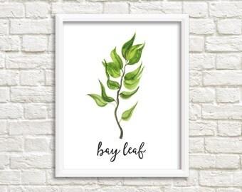 Watercolor Bay Leaf Herb Printable Wall Art Botanical Herb Print Herb Printable Bay Leaf Wall Art Printable Kitchen Decor Kitchen Wall Art