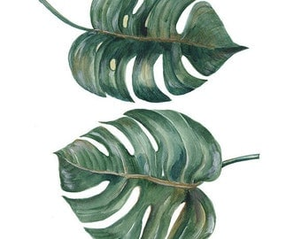 Tropical Split Leaves Philodendron plant botanic watercolor painting