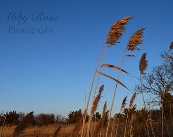 Connecticut Photography, East Coast Wall Art, Marsh Photo