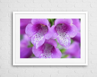 Lilac Flower Art Photo With Frame