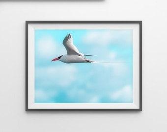 Bird Print, Seagull Bird, Gulls Print, Flying Bird , Abstract Art, Seagull Wall Print, Minimalist Art, Modern Wall Art, Beach house Decor