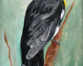 Yellow Hooded Black Bird  miniature Barbara Haviland Texas Contemporary Artist