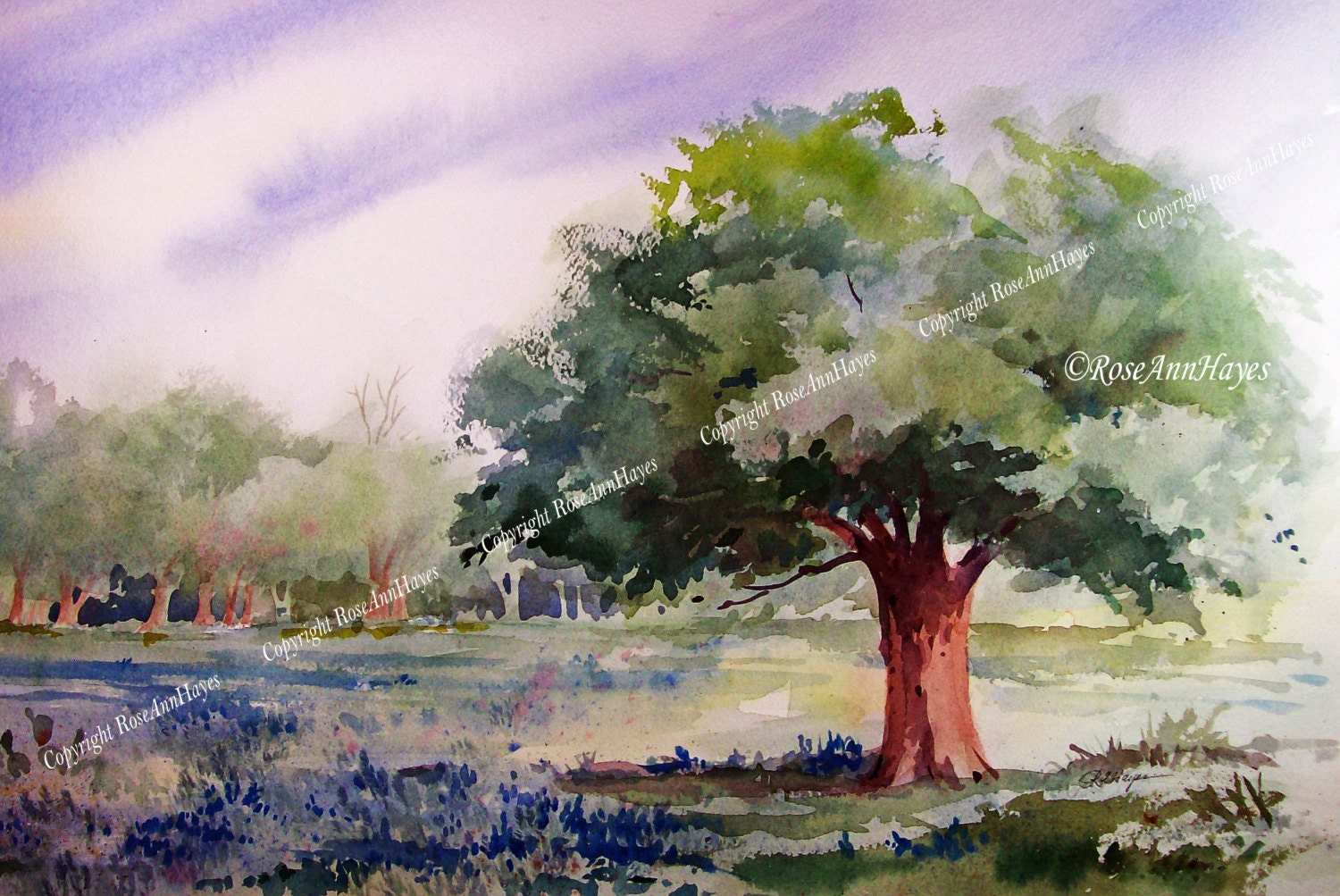 Live Oak Tree And Bluebonnets Watercolor Painting 5 X 7 Print