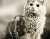 Antique cat photo postcard, cat with glass eyes, glass eyes photo postcard, novelty postcard, antique cat photo postcard, Real eyes postcard