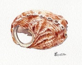 Original watercolour shell painting