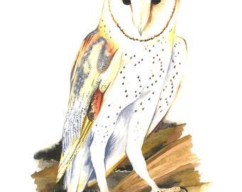 "ORIGINAL Watercolor Bird Painting / ""Tyto II"" / Barn Owl"
