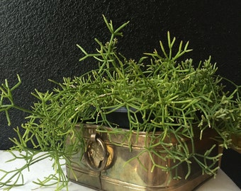 hollywood regency wide square brass planter with handles