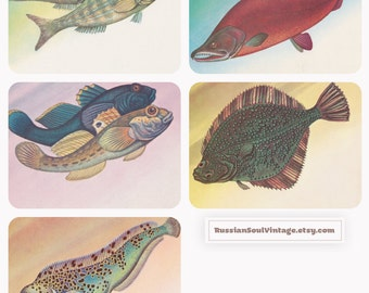 Fishes, Drawings by Y. Levinovsky. Set of 5 Vintage Postcards -- 1983
