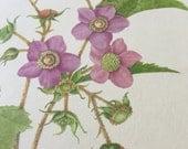 Vintage Color Lithograph Print- Flowering Raspberry- Wildflower Series