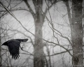 Crow Fine Art Photography, Crow Home Decor, Print, Bird Flying in the Forest, Unique Nature Print, Dark Foggy Forest, Flying Crow