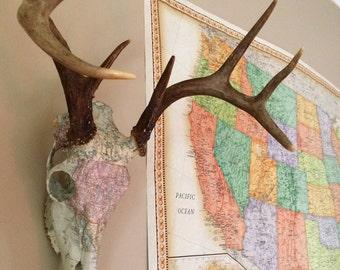 Map print deer skull // travel // antlers // 8pt