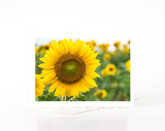 Bright Yellow Sunflowers Field Card, Blank Photo Greeting Cards, Photo Note Cards, Card Sets, Flower Photography, Nature Photography Cards