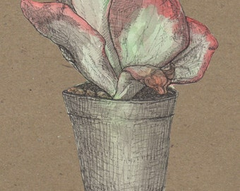 Succulent Pocket Notebook