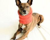 MEDIUM Basic Carrot Orange SnugABull Dog Snood with Ribbed Collar & Collar Access