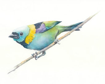 Bird, art, bird print, Watercolor, giclee, watercolor painting, watercolor print,  Green-Headed Tanager----watercolor giclee print