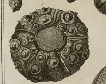 1763 Antique large print of MARINE FOSSILS. SHELLS. Extinct molluscs. Echinites. Diderot Encyclopédie Engraving. 242 years old.