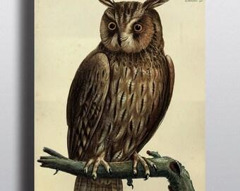 Antique Owl Print Great Horned Owl Decor Owl Poster 1800s Antique Illustration Art Prints Wall Decor Wall Art Bird Prints Poster