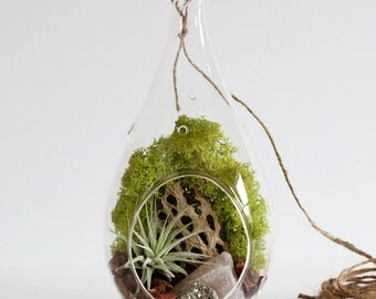 Rose Quartz and Pyrite Air Plant Terrarium Kit with Chartreuse Moss - Teardrop