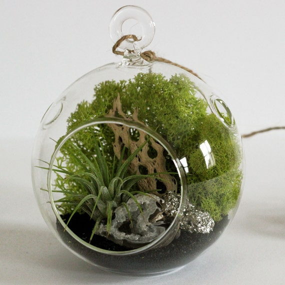 Geode and Pyrite Air Plant Terrarium Kit with Black Sand || Small Round