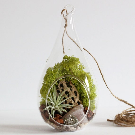 Rose Quartz and Pyrite Air Plant Terrarium Kit with Chartreuse Moss - Teardrop