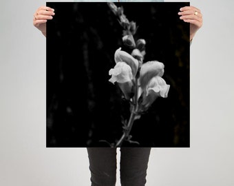 "Floral 5 ( 24"" X 24"" Print )"