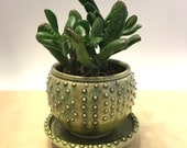 "Custom order for Olivia Fern Green textured Planter. Flower Pot. Diameter of 5-6"" and oversized drainage dish"