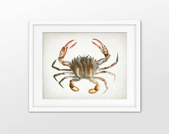 Crab Art Print - Crab Poster - Antique Crab Illustration - Marine Crab - Crustacean - Bathroom Decor - Single Print #1564 - INSTANT DOWNLOAD