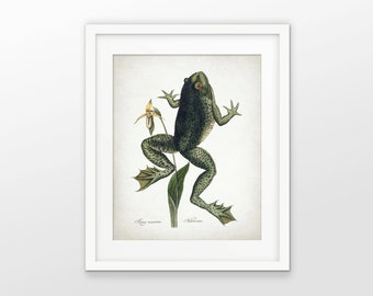 Frog Art Print - Frog Illustration - Jumping Frog Decor - Antique Frog Print - Amphibian Wall Art - Single Print #1635 - INSTANT DOWNLOAD