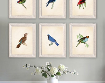living room art prints. Audubon Bird Prints  Art Print Dining Room Living room art Etsy